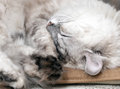 White lazy cat drowsing on chair Royalty Free Stock Photos