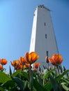 White lighthouse with orange tulips Royalty Free Stock Photo