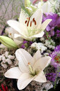 White lilies close up love background Stock Photo