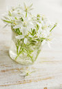 White lilies delicate spring flowers on board Royalty Free Stock Photo