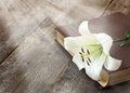 White lily on the book illuminated by sun a wooden background Royalty Free Stock Photos