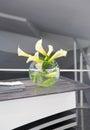White Lily flower vase Royalty Free Stock Photo