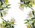White lilys background Stock Photos