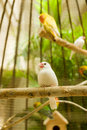 White Little Bird Royalty Free Stock Images