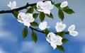 White magnolia blossom on blue background