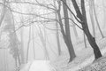 White misty forest park and vanishing path in fog Stock Photos