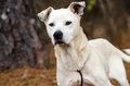 White Mixed Breed Dog Adoption...