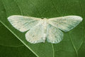 White moth Royalty Free Stock Photo
