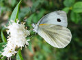 White moth on the flowers Royalty Free Stock Image