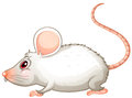 A white mouse illustration of on background Royalty Free Stock Photo