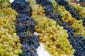 White muscat grape and dark grape - sweet and tasty dessert, hea Royalty Free Stock Photo