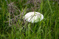 White Mushroom On Nature In Th...