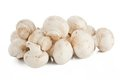 White mushrooms Royalty Free Stock Photography