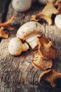 White mushrooms and dried chanterelle toned Royalty Free Stock Image