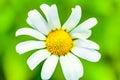 White Nice Flower