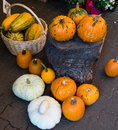 White,Orange, green and yellow pumpkins