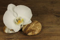 White orchid with decorative stone on wooden background Royalty Free Stock Photos