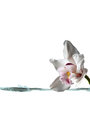 White orchid flower and stream of water for spa background Stock Photos