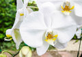 White orchid flowers on bright summer day Stock Photos