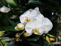 White orchid in a park Stock Images
