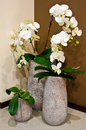 White orchids in designer vases Royalty Free Stock Photo