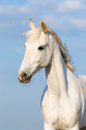White Orlov trotter horse on the sky background Royalty Free Stock Photos
