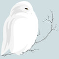 White owl cute snowy sitting on branch wildlife in the north Stock Photo