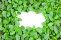 White paper green leaf background