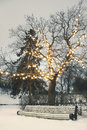 White park bench under illuminated tree in winter large bare on snowy evening Stock Photo