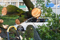 White passenger car crushed by fallen tree Royalty Free Stock Photo