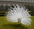 White Peacock Bird Royalty Free Stock Photo