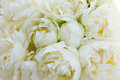 White peony flowers Royalty Free Stock Photo