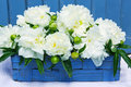 White peony flowers closeup of in blue basket Stock Photos