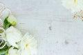 White peony flowers Royalty Free Stock Photo