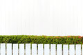 White picket fence and green leaves wall on white wooden wall Royalty Free Stock Photo