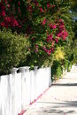 White Picket Fence and Side Walk Royalty Free Stock Photo