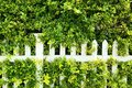 White picket fence with wall of trees Royalty Free Stock Photo