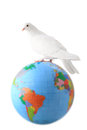 White pigeon. globe Royalty Free Stock Photo