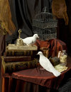 White pigeons two among vintage books Royalty Free Stock Image