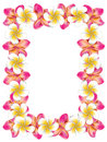 White and pink frangipani flowers frame floral made from plumeria Royalty Free Stock Photos