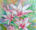 White pink lilies watercolor illustration Stock Photos