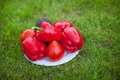 White plate with red peppers on a green grass see my other works in portfolio Stock Images