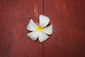 White  plumeria flower  on grunge wood Royalty Free Stock Photo
