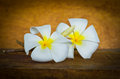 White plumeria flower on wood table still life Royalty Free Stock Photo
