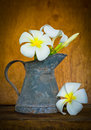 White plumeria flower on wood table still life Stock Image