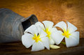 White plumeria flower on wood table still life Stock Images