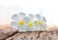 White plumeria flowers on wood rustic Stock Photography