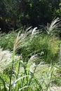 White plumes Royalty Free Stock Photo