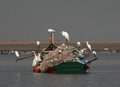 White pond heron sitting family union on boat meditation or chat Stock Images