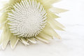 White protea flower on a marble background Stock Photos
